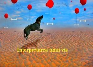 Cainele din vise Interpretare si semnificatie vise